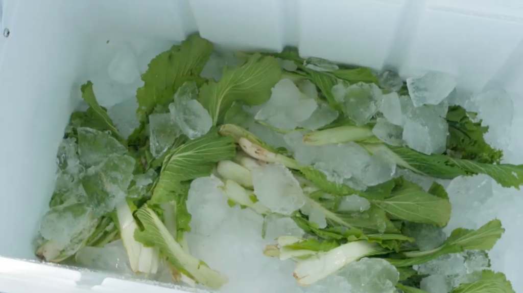 """Icing, Source: World Vegetable Center, """"Cooling Methods"""", 2017, Youtube"""